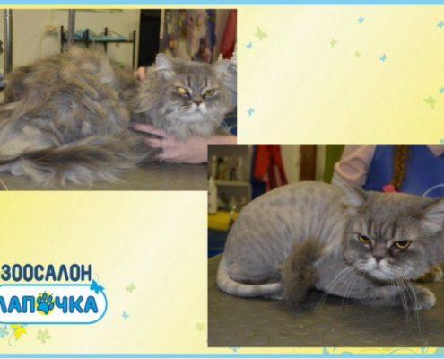груминг кошек в СПб