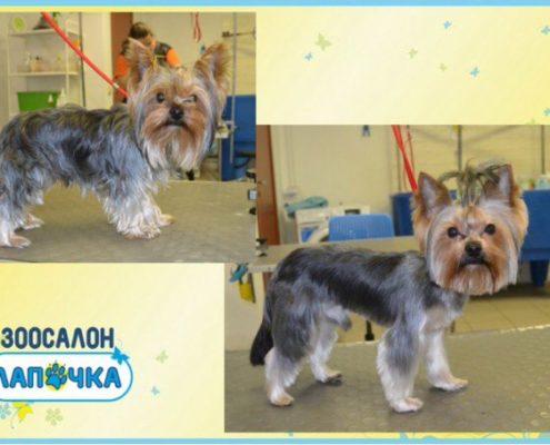 фото до и после стрижки собаки