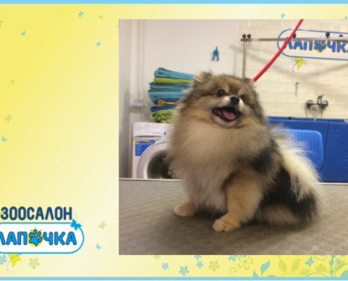 Стрижка собак в СПб