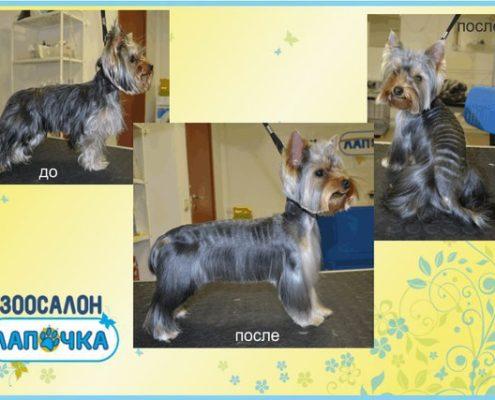груминг собак в СПб